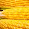 Easy Ways To Cook Corn On The Cob