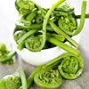 Spring Fiddlehead Salad