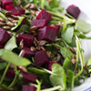 Watercress & Beet Salad