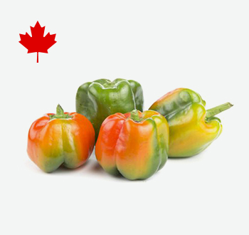 Suntan Peppers
